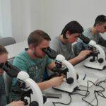Studierende mikroskopieren